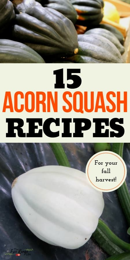 Vegetable Garden Recipes: Have a bumper crop of squash? Get these 15 amazing acorn squash recipes!