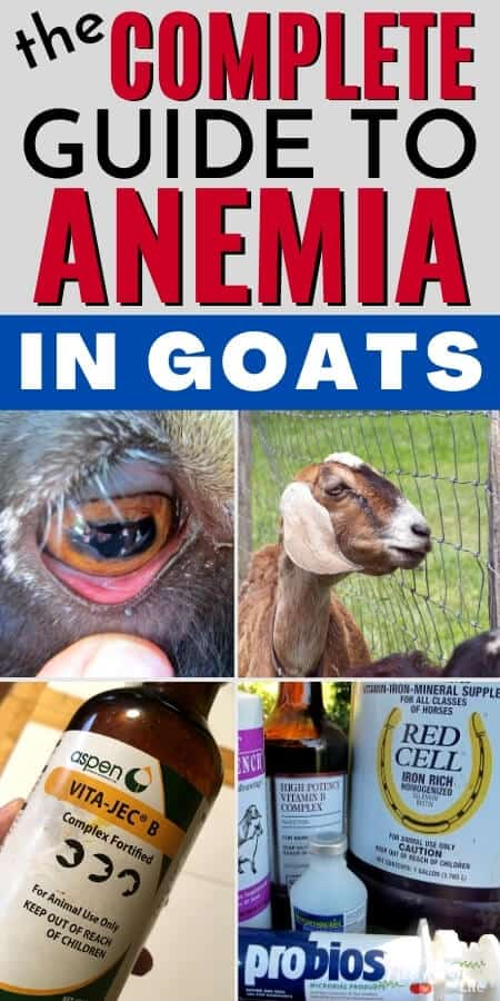 the complete guide to anemia in goats