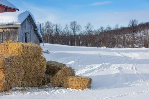 bales of straw stacked outside of chicken coop to be used for insulation and begging