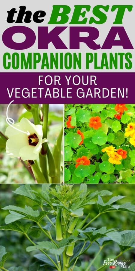the best okra companion plants for your vegetable garden