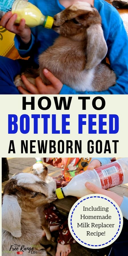 Raising Goats: Sometimes you have to be prepared for a mother to not feed their kid...learn how to bottle feed a goat kid!