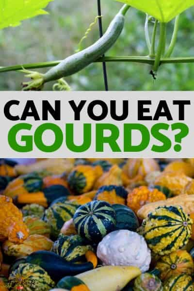 can you eat gourds