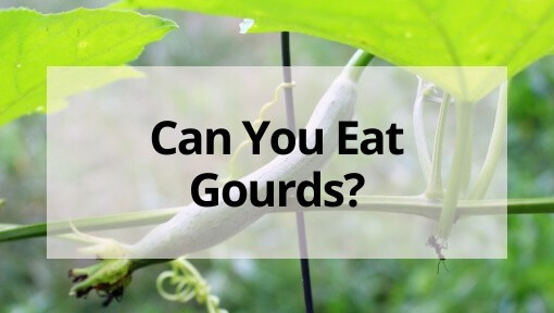 Can You Eat Gourds? (or Should They Stay Decoration-Only?)