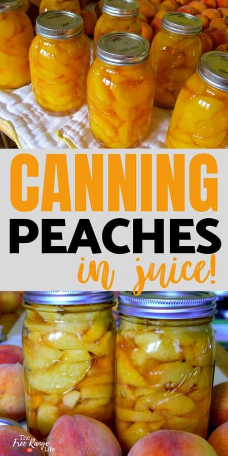 canning peaches in juice with pictures of home canned peaches