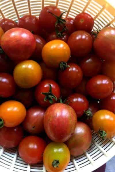 basket of assorted cherry heirloom tomatoes