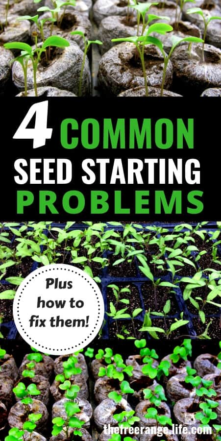 Vegetable Gardening Ideas: Is your seed starting failing? Check out these 4 common problems AND how to fix them