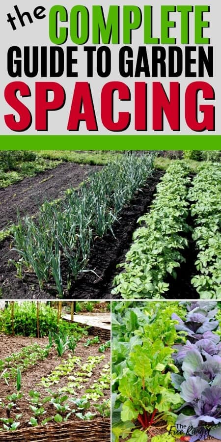 the complete guide to garden spacing