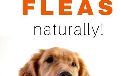 How to Control Fleas Naturally!