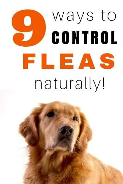 How to Control Fleas Naturally!