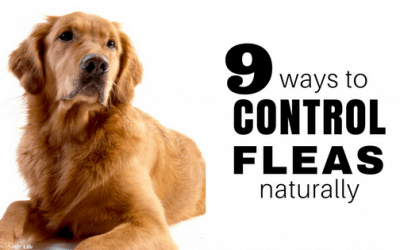 9 Non-Toxic Ways to Get Rid of Fleas Naturally