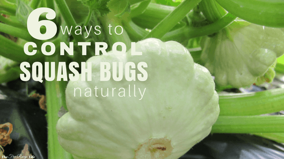 6 ways to get rid of squash bugs in your garden naturally the 6 ways to get rid of squash bugs in your garden naturally the free range life mightylinksfo