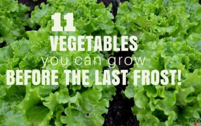 11 Vegetables You Can Plant BEFORE the Last Frost
