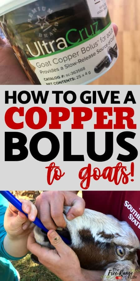 how to give a copper bolus to goats