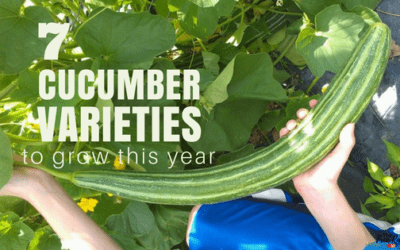 7 Cucumber Varieties to Grow This Year