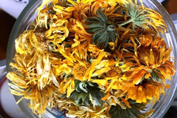 dried clalendula in a jar. close up