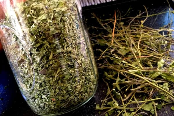 jar of dried oregano with stems in the background
