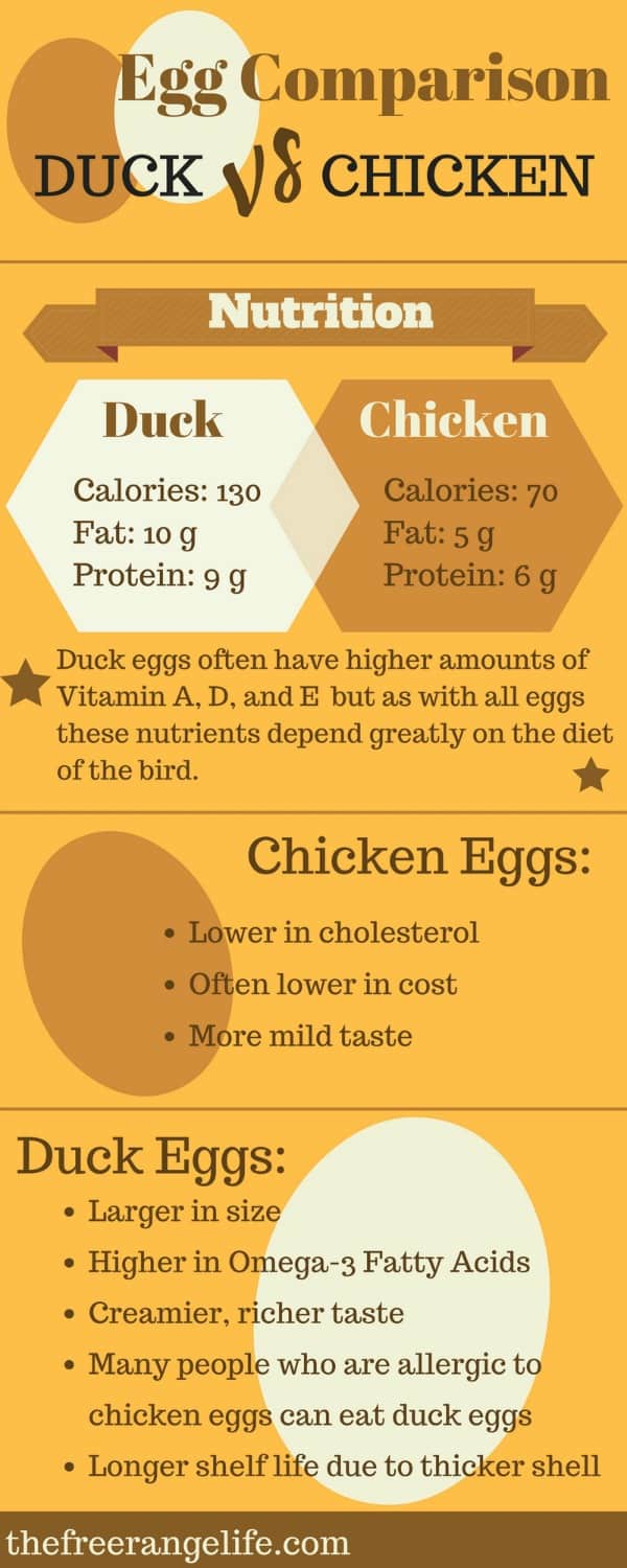 chicken eggs vs duck eggs comparison (1) (1)