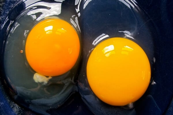 duck egg vs chicken egg inside