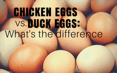 Duck Eggs vs Chicken Eggs: What's the Difference