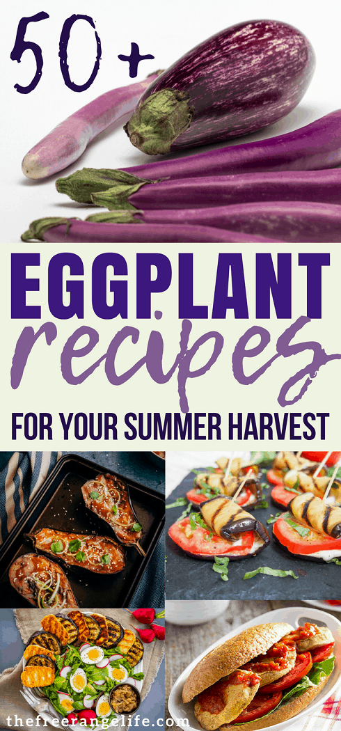 Eggplant Recipe! More than 50 delicious recipes to choose from including baked eggplant recipes, grilled eggplant recipes, sauteed eggplant recipes, and more!