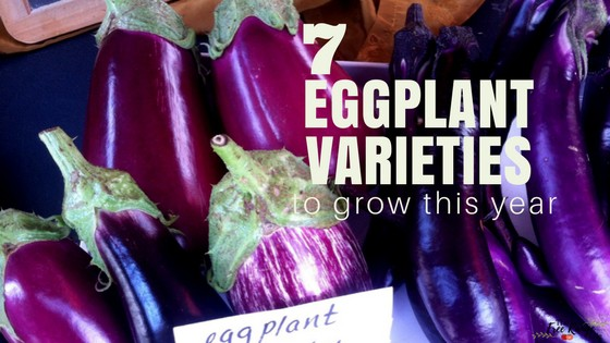 7 Amazing Eggplant Varieties to Try This Year!