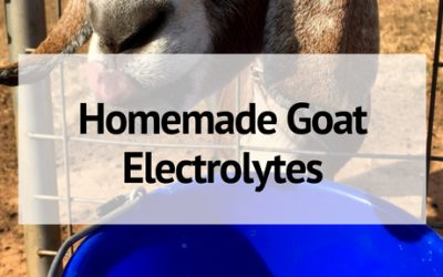 How to Make Homemade Goat Electrolytes