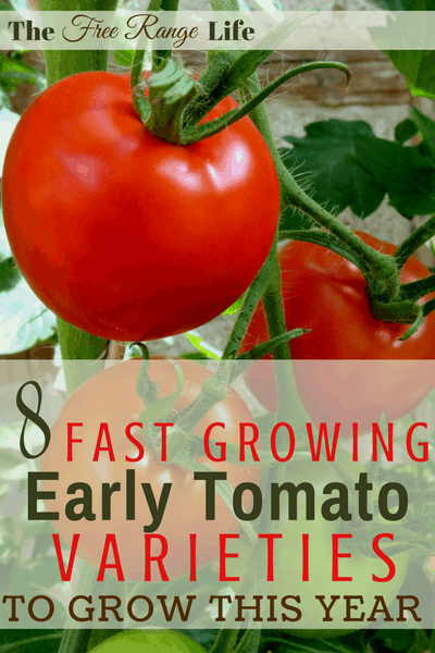 8 Fast Growing Early Tomato Varieties to Try This Year