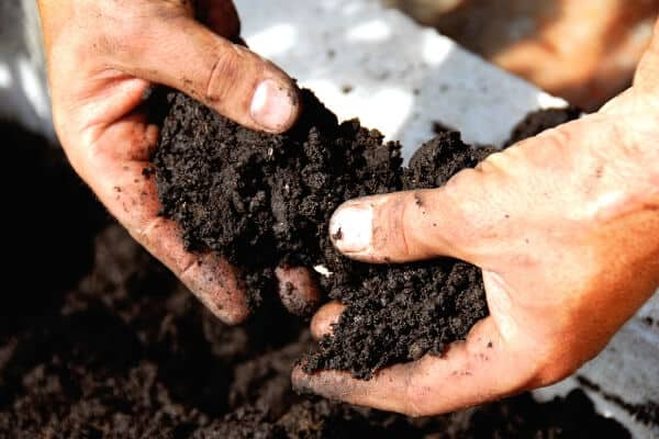 2 hands holding fertile black garden soil