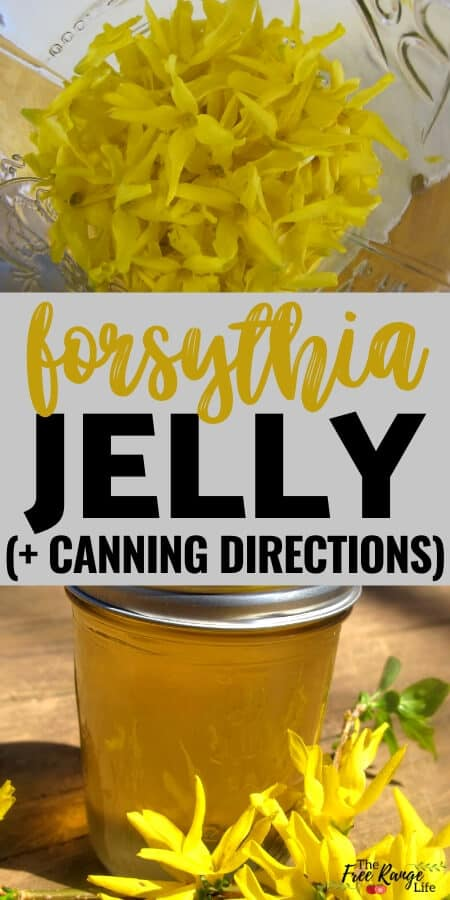 forsythia jelly with jar of blossoms and a final jar of yellow jelly