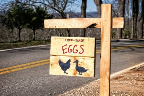 free range eggs for sale sign