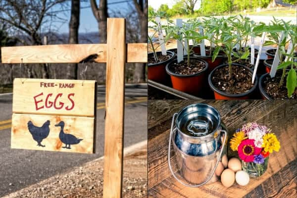 farm fresh eggs sign, milk tote, and eggs, and garden starts for sale