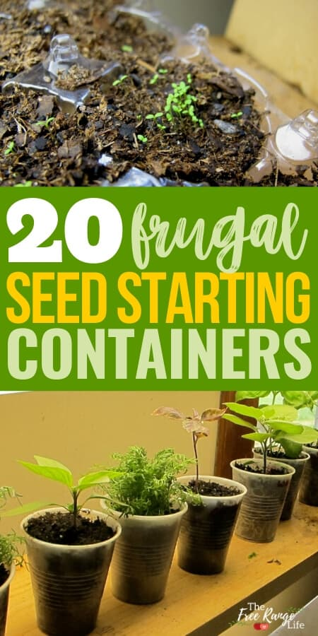 20 frugal seed starting containers with picture of seedlings in a plastic egg carton and plastic cups