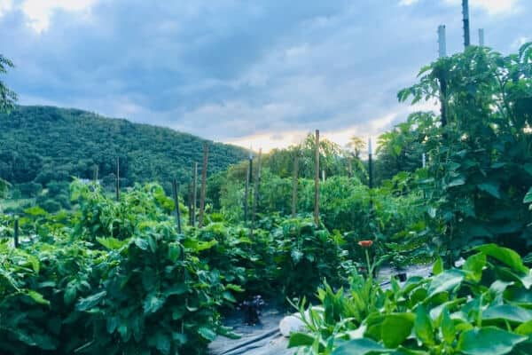 vegetable garden in the mountains