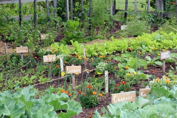 backyard vegetable garden with labeled beds