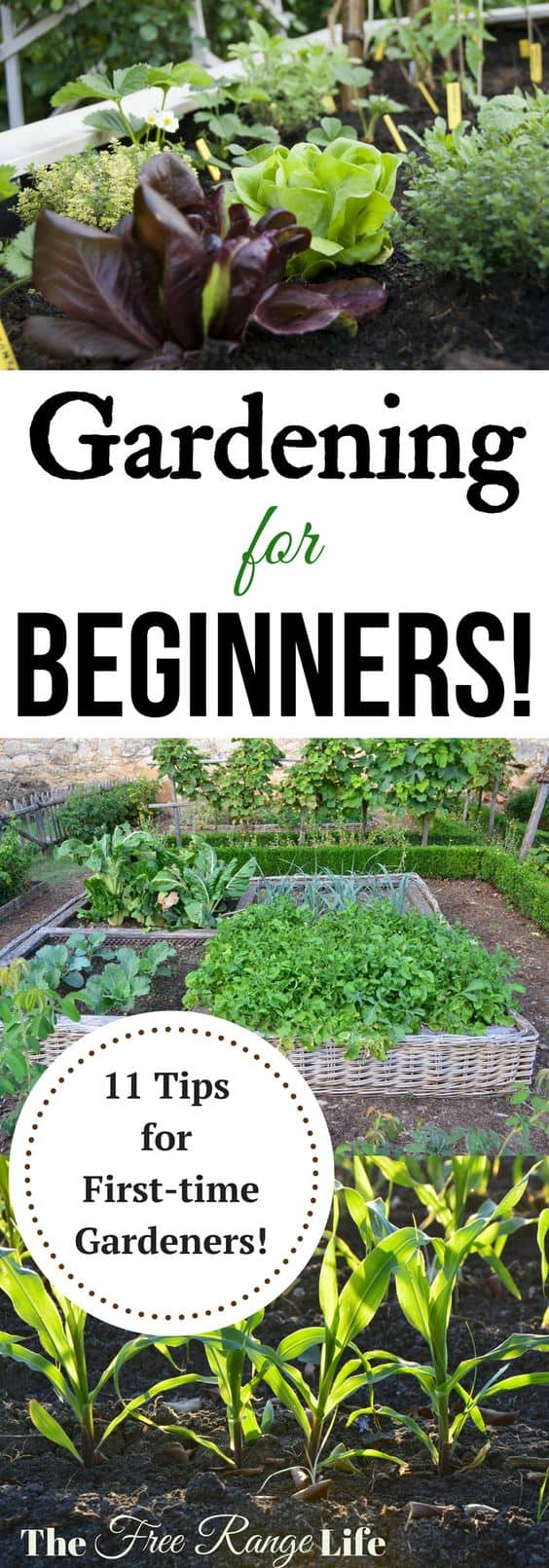 Gardening for Beginners: 11 Tips for Beginning Gardeners! Get ready to grow your best garden ever!