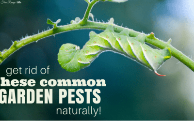 Get Rid of These Common Garden Pests Naturally!