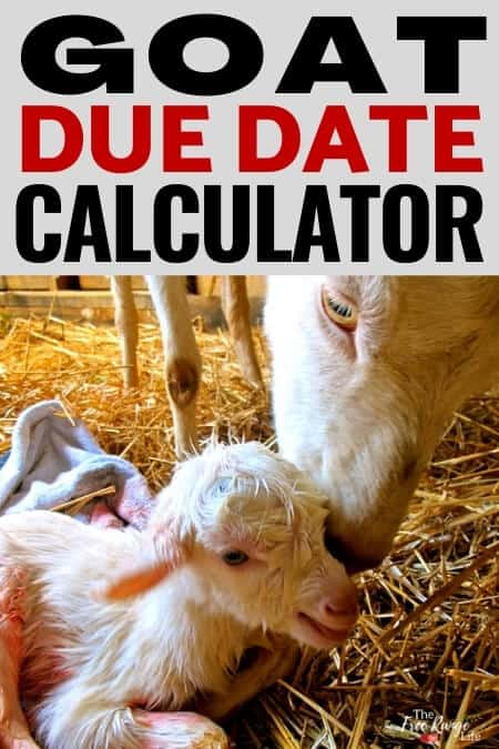 goat due date calculator