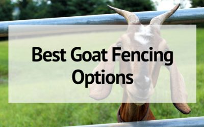 The Best Options for Goat Fencing