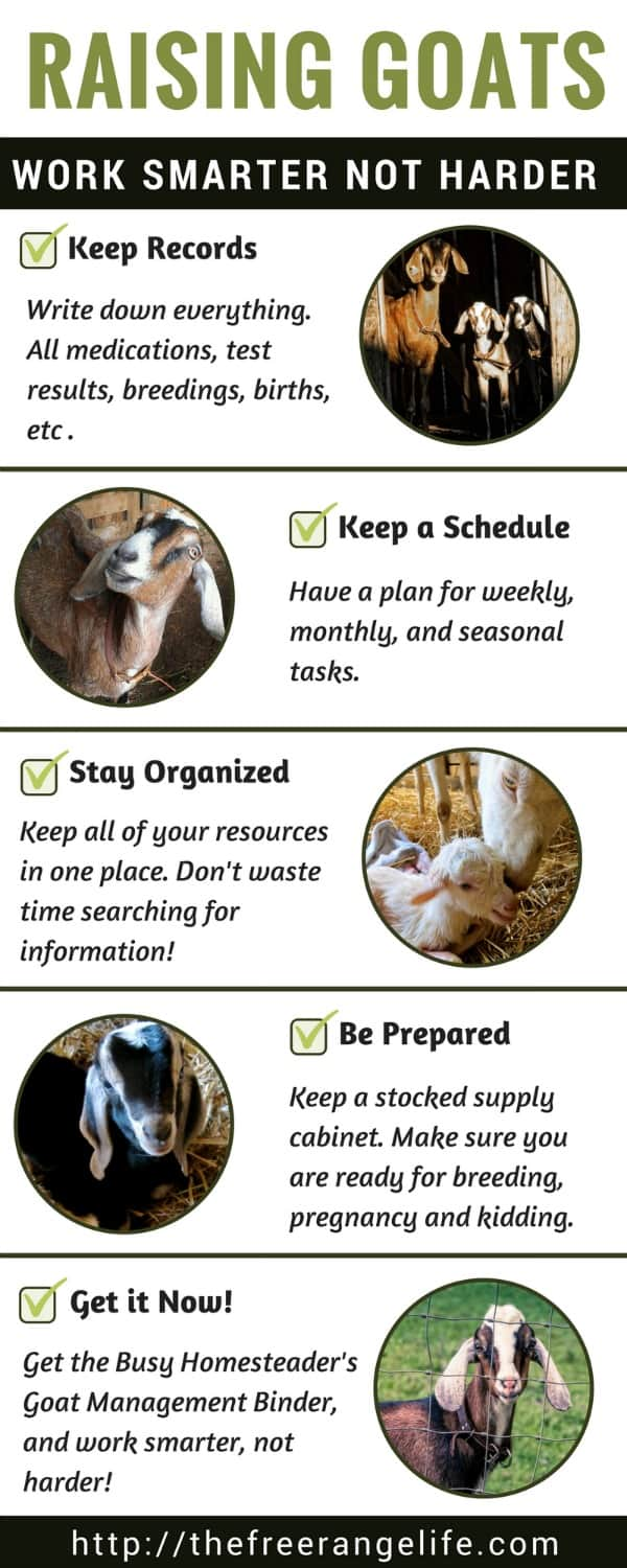 the busy homesteader s goat management binder the free range life