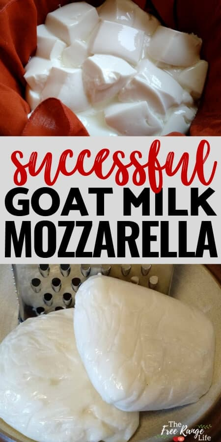 successful goat milk mozzarella 2 fresh cheese blocks