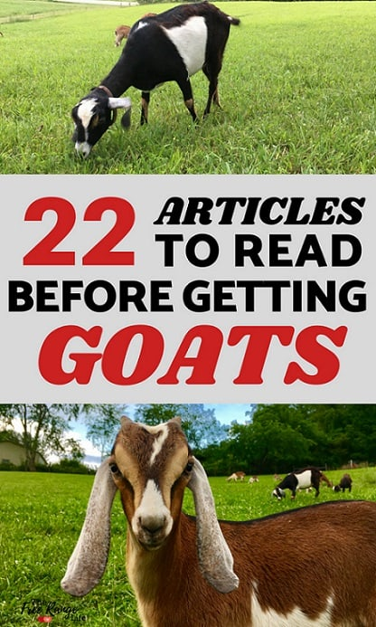 Raising Goats for Beginners: Learn everything about raising goats from a seasoned goat owner with these 22 articles