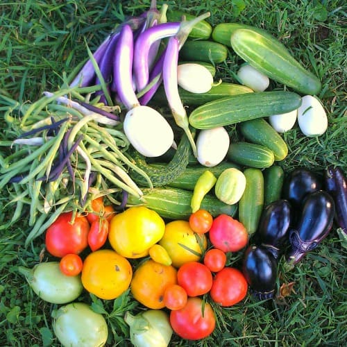 No more excuses! You can garden even with limited time. Try out these time-saving tips to grow more food in less time!