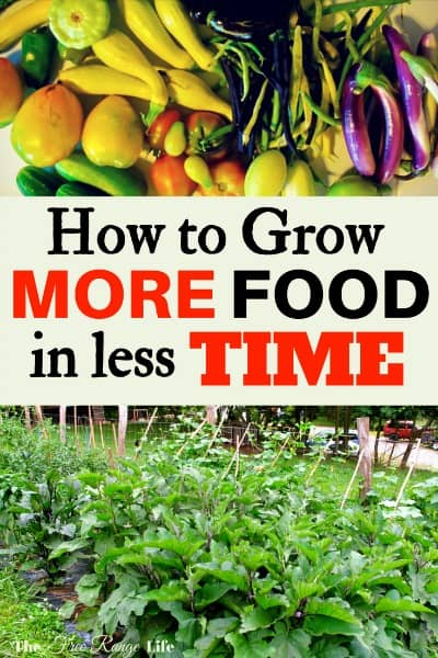 Do you want to grow your own food but have a full time job? Are you overwhelmed with the work in your garden? Try out these time-saving tips to grow more food in less time!