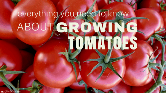 Everything You Need to Know About Growing Tomatoes