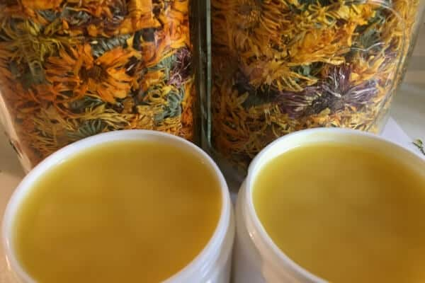 2 containers of healing salve open infront of dried calendula