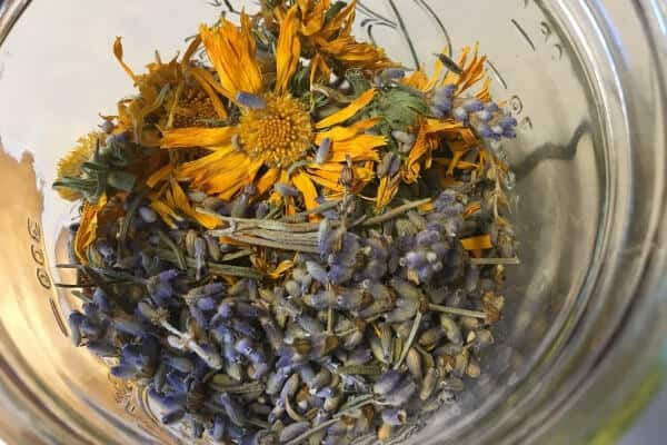 dried calendula and lavender for salve