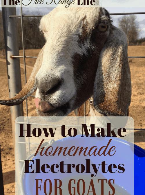 Homemade Goat Electrolytes