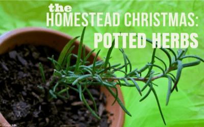 Homemade Homestead Christmas: Potted Herbs