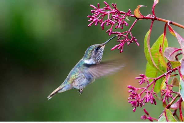 hummingbird drinking from flower