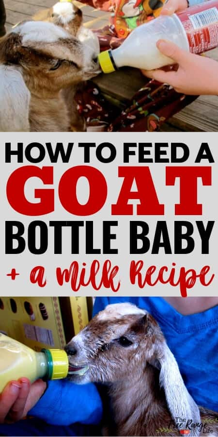 how to bottle feed a goat plus a milk recipe